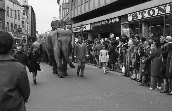 Elephants Parade through Market Place
