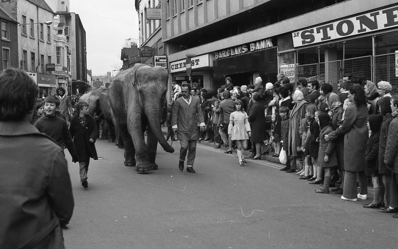 Elephants parading through Mansfield town centre | Mansfield Chad